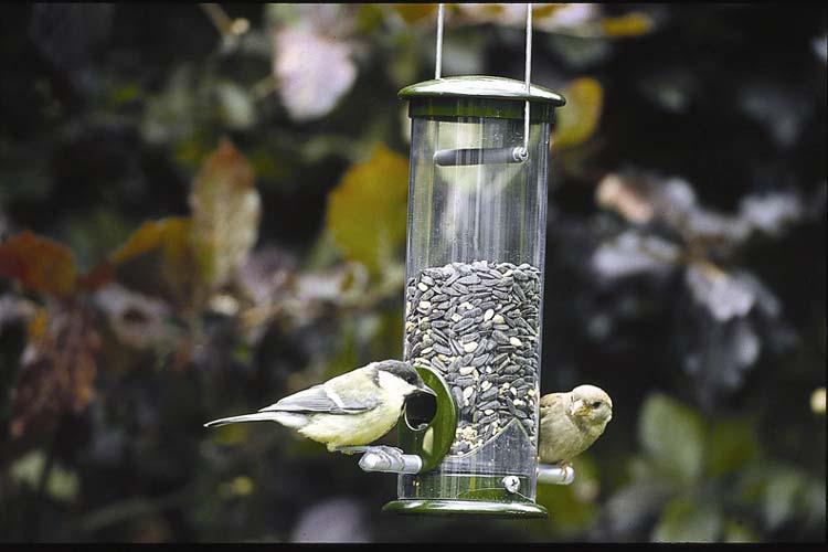 Wer einen Futterplatz einrichtet, kann regelmäßig Vögel beobachten.