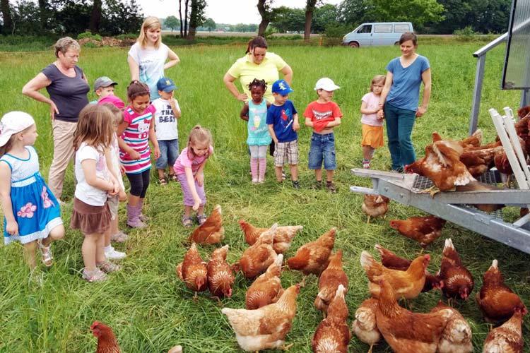 Ein Hühnerhof auf Reisen.