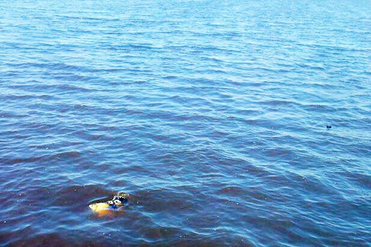 Ein Seehund wurde gestern im Entlastungspolder für den Augustfehnkanal gesichtet.