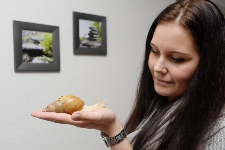 Die Oldenburgerin Gina Kuhr züchtet Afrikanische Riesenschnecken.