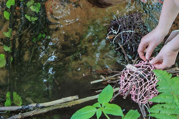 Sogenannte Substratexponate nach dem Vorbild natürlicher Holzlagen im Bach – mit Netzmaterial zusammengeschnürt – bieten Insekten und anderen Wassertieren ein Wohnmobil, das die Wiederansiedlung an anderer Stelle ermöglicht