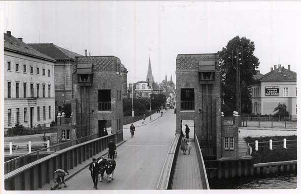 Auch Kühe wurden über die Cäcilienbrücke geführt. Ein Bild, das uns heute schon sehr verwundern würde.