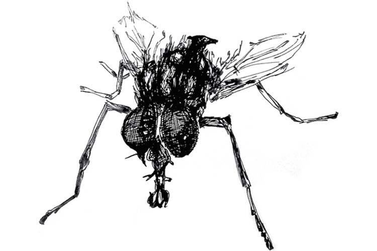Alle Oldenburger sind dazu aufgerufen, ihre individuelle Oldenburger Fliege zu zeichnen.