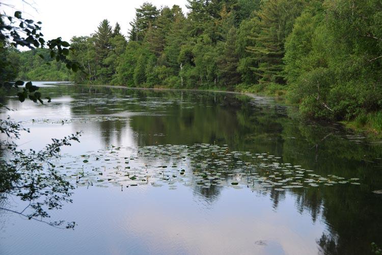 Die Naturschützer sorgen sich um die Ahlhorner Fischteiche.