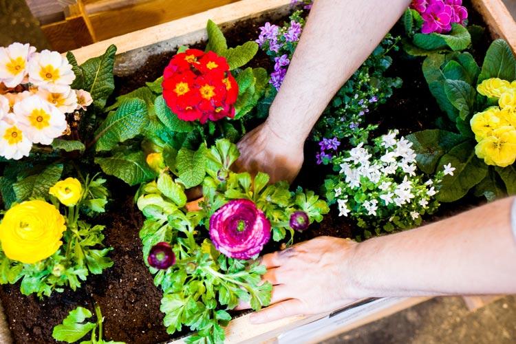 Die Oldenburger Gartentage präsentieren alles zum Thema Garten. Hobbygärtner können sich unter anderem über Pflanzenwelten informieren.
