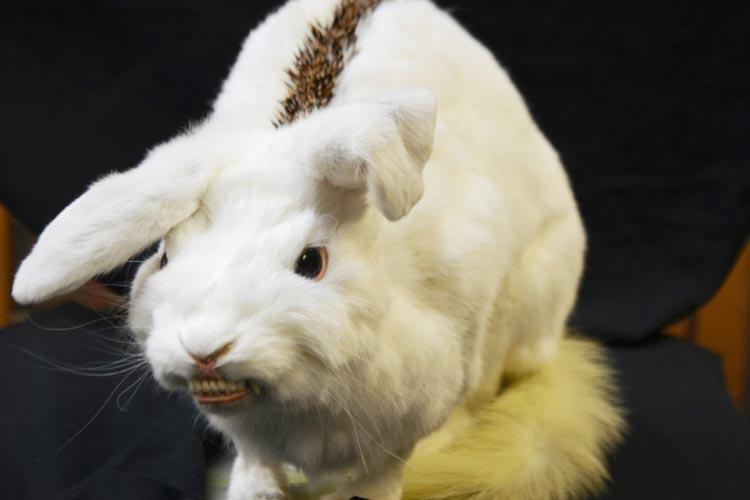 Im Landesmuseum Natur und Mensch Oldenburg können bis zum 31. März Namensvorschläge für ein schaurig-schönes Mischwesen abgeben werden.