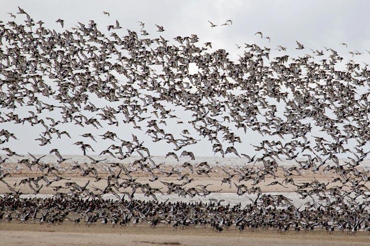 Damit Zugvögel präzise navigieren können, spielen quantentechnische Details offenbar eine große Rolle.