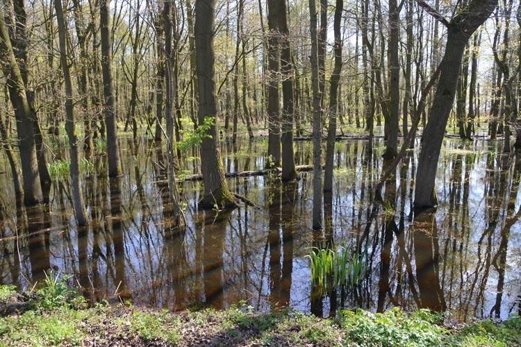 Der Dümmer See wird von Wiesen und Niedermooren umgeben, die ein Paradies für Vögel bieten.