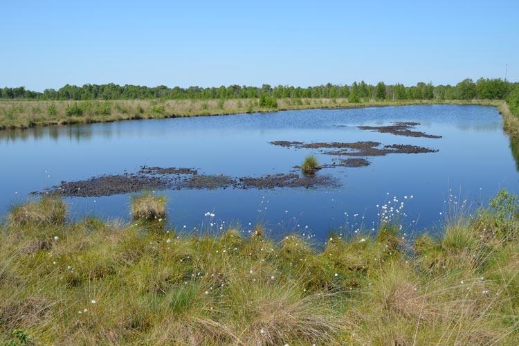 Auf dem Gebiet der Molberger Dose erfahren die Besucher Natur pur und erleben das Hochmoor. Experimente entlang des Moorleerpfades laden zum Mitmachen ein.