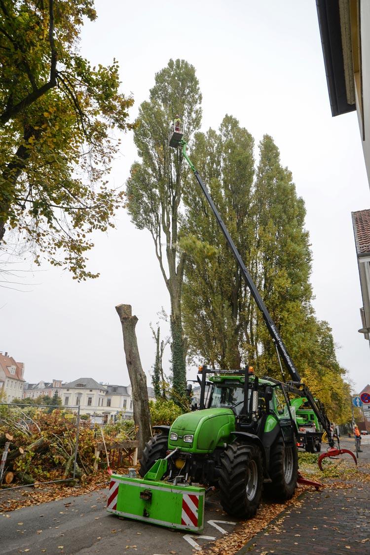 In dieser Woche wurden Bäume aus Sicherheitsgründen gefällt. Für sie sind Ersatzpflanzungen geplant.