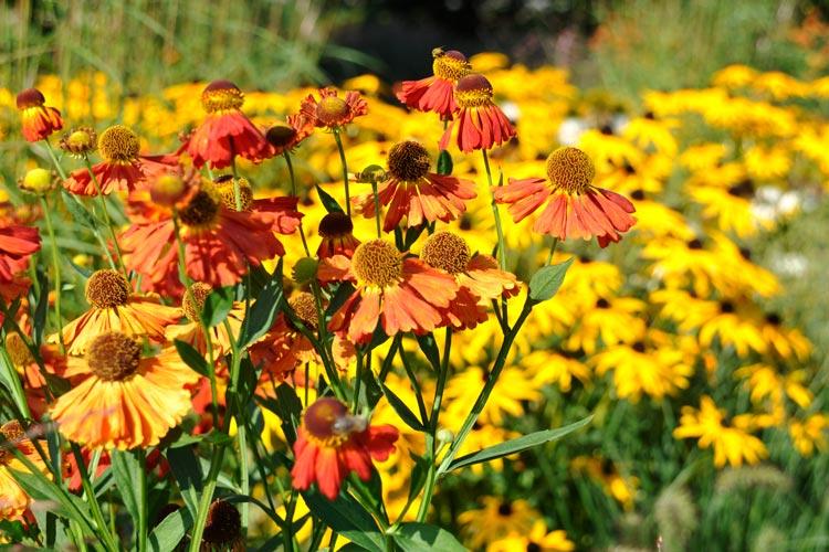 Keinen vorgegebenen Eintritt erhebt der Park der Gärten in Bad Zwischenahn an den fünf letzten Tagen der Saison bis zum 9. Oktober.