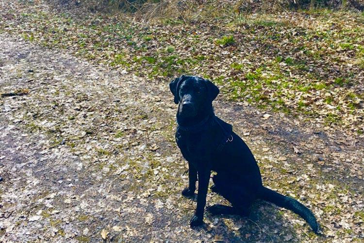 Am Samstag, 1. April, beginnt die Anleinpflicht für Hunde. Sieben Freilaufflächen stehen in Oldenburg zur Verfügung.