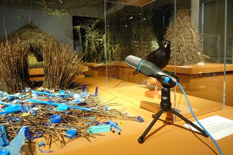 Das Landesmuseum Natur und Mensch in Oldenburg lädt zum Poetry-Slam ein.