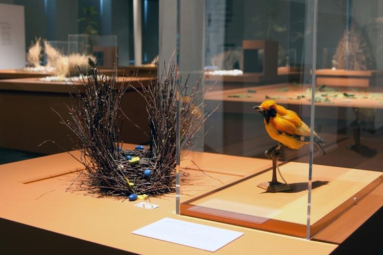 Bei der Sonderausstellung Laubenvögel – ein Leben auf der Bühne geht es im Oldenburger Landesmuseum Natur und Mensch kreativ zu.