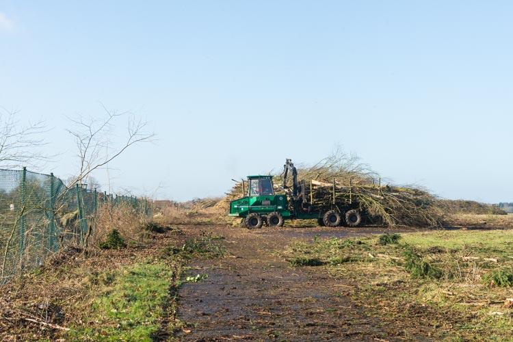 Für die Vorbereitungen des Smart City Quartiers auf dem Fliegerhorst werden weitere Baumfällungen notwendig.
