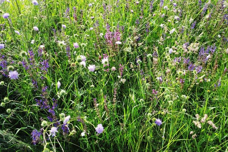 Die Ansprüche an Grünland sind vielfältig. Es ist nicht nur Weide für Kühe und Wiese zum Mähen, sondern auch blühender Lebensraum für Pflanzen und Tiere.