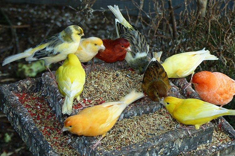 In der Nacht von Sonntag auf Montag sind im Botanischen Garten zwischen 21 und 8 Uhr Vögel gestohlen worden.
