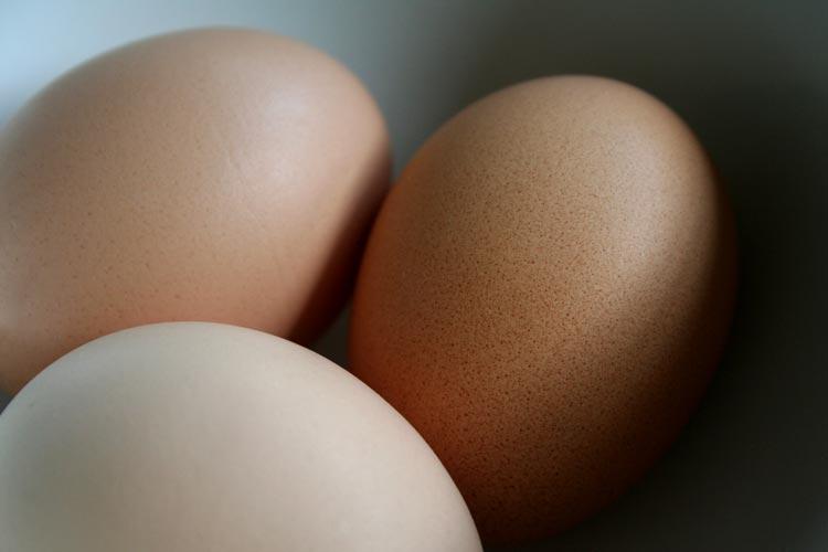 Wieder einmal sind mit Salmonellen verunreinigte Eier in den Verkauf gelangt.