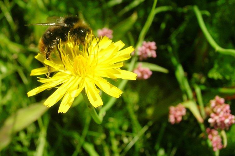 Mehr als 400 Anregungen für Wildblumenwiesen- und Blühstreifen-Flächen sind beim Fachdienst Stadtgrün der Stadt Oldenburg eingegangen.