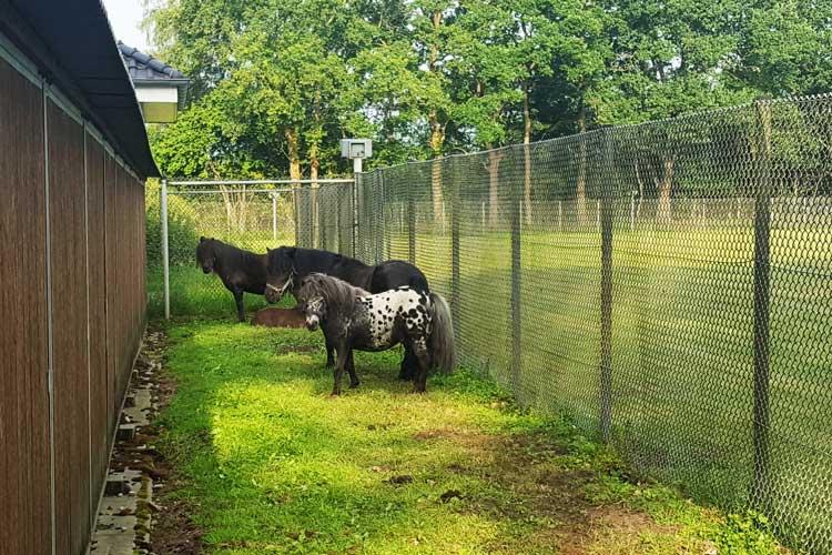 Für die Ponys wurde auch ein Platz gefunden.