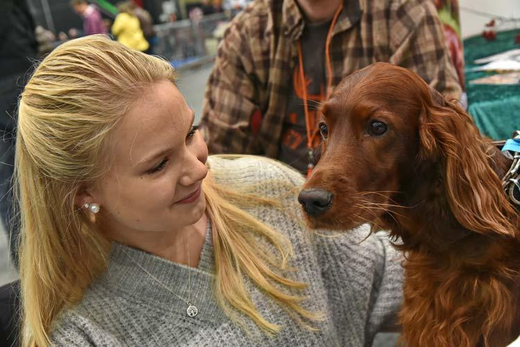 In der Hundewelt präsentieren zahlreiche Vereine ihre Rassen.