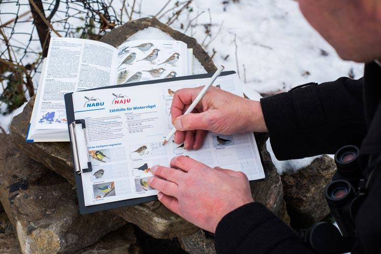 """Im Rahmen der deutschlandweiten Mitmachaktion """"Stunde der Wintervögel"""" wurden wieder Vögel gezählt."""