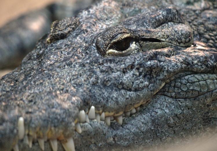 Krokodil, über dts Nachrichtenagentur