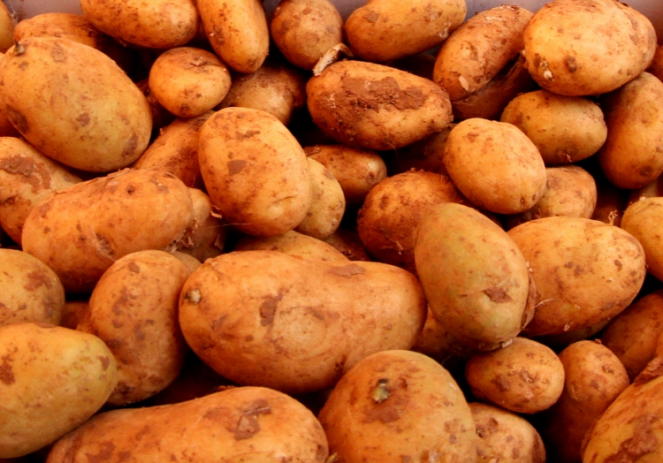 Kartoffeln, über dts Nachrichtenagentur
