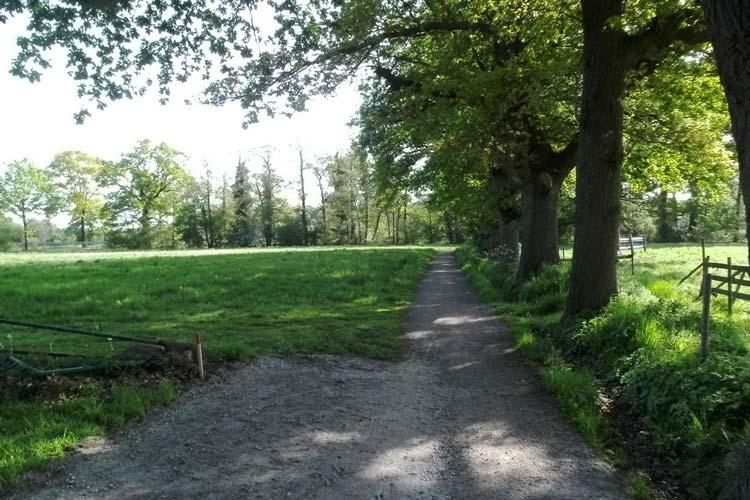 Der See-Rundwanderweg wird auf diesem Teilstück verbreitert werden.
