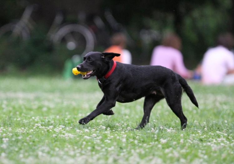Für Hundehalter und Züchter sollen künftig strengere Regeln gelten.