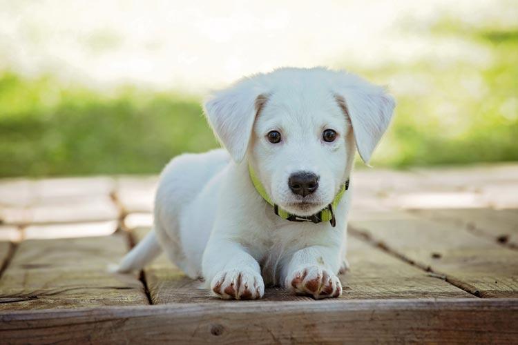 Egal, ob eine Reise kurz oder lang ist, die Hundehaftpflicht sollte als Selbstverständlichkeit frühzeitig abgeschlossen werden.