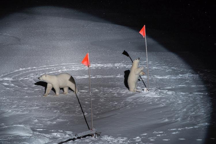 """Ein Eisbär und sein Junges erkunden in der Arktis neugierig die Expeditions-Ausrüstung, die das Forscherteam der """"Polarstern"""" dort aufgebaut hat. Die Aufnahme gewann den ersten Preis in der Kategorie """"Umwelt""""."""