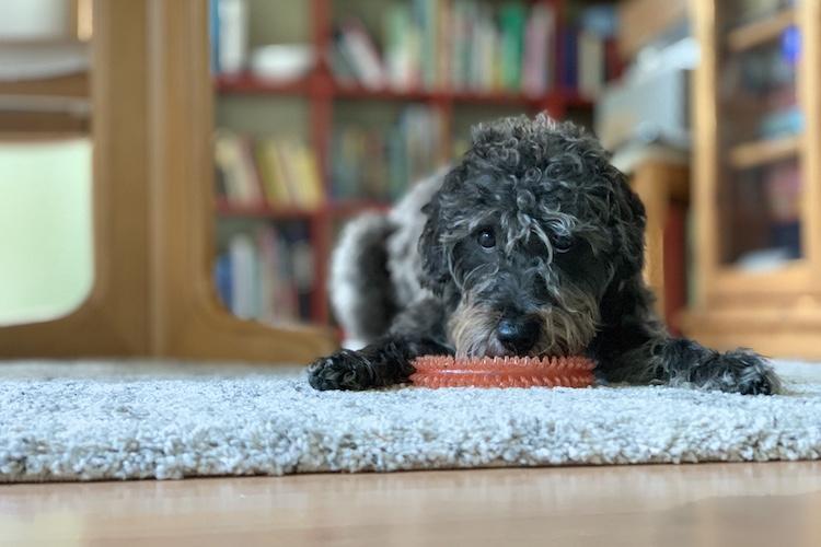 Hunde können jetzt per Mausklick bei der Stadt Oldenburg angemeldet werden.