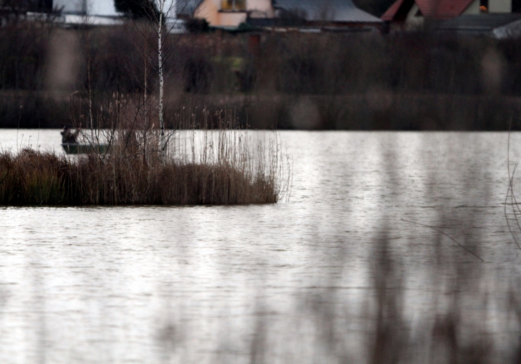 In stehenden Gewässern fühlt sich der Frosch wohl, über dts Nachrichtenagentur