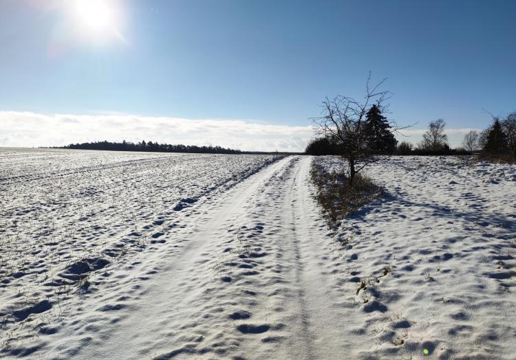 Die Ruhe vor dem Sturm: Schnee im Norden Brandenburgs, über dts Nachrichtenagentur