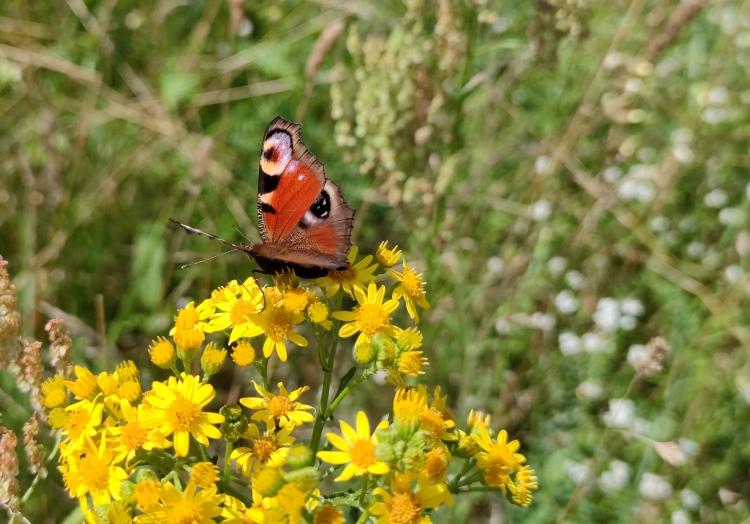 Schmetterling, über dts Nachrichtenagentur