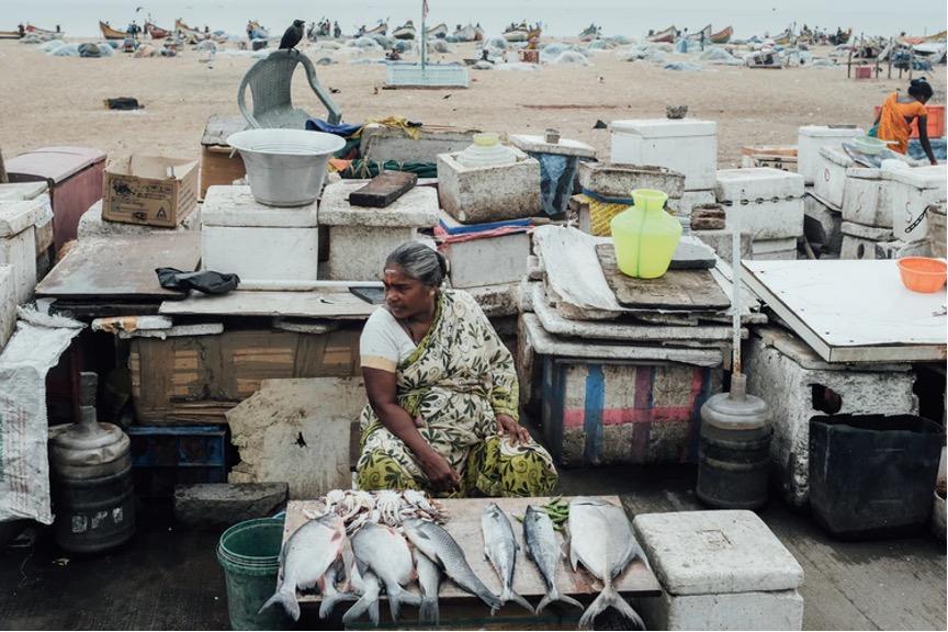 Verkauf von Fisch in der Stadt Chennai.