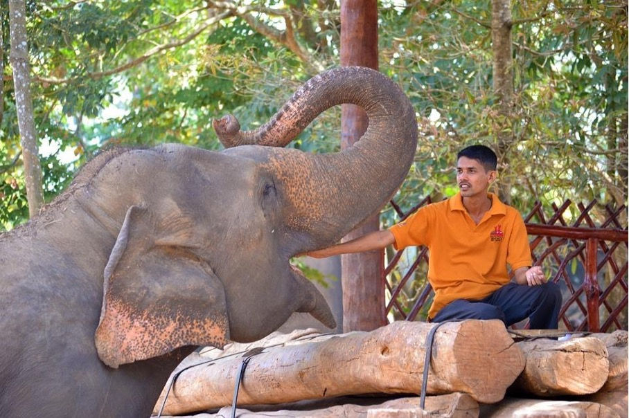 Das Pinnawala Elefantenwaisenhaus, wo der berühmte Elefantenritt von Indiana Jones stattfand.